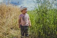 field, cute, farm