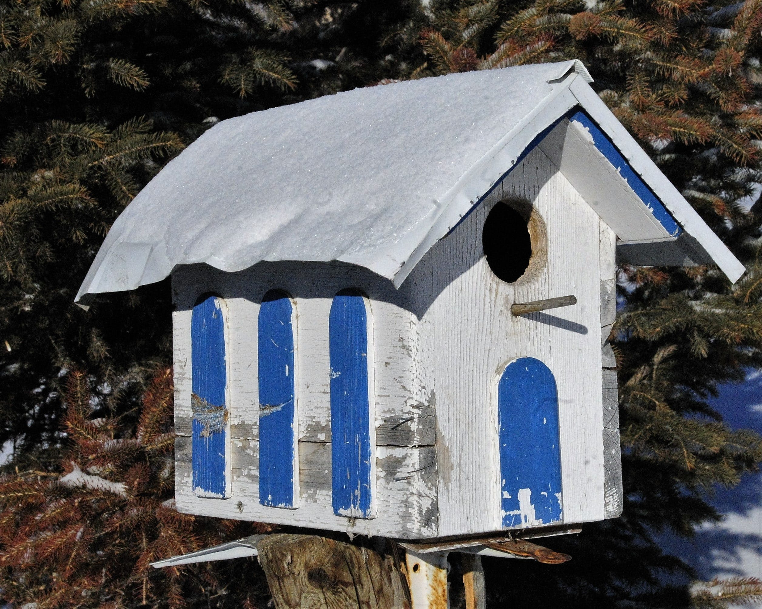 Free stock photo of bird, bird house, birdhouse