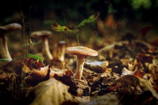 Free stock photo of leaves, mushrooms, macro, fungus