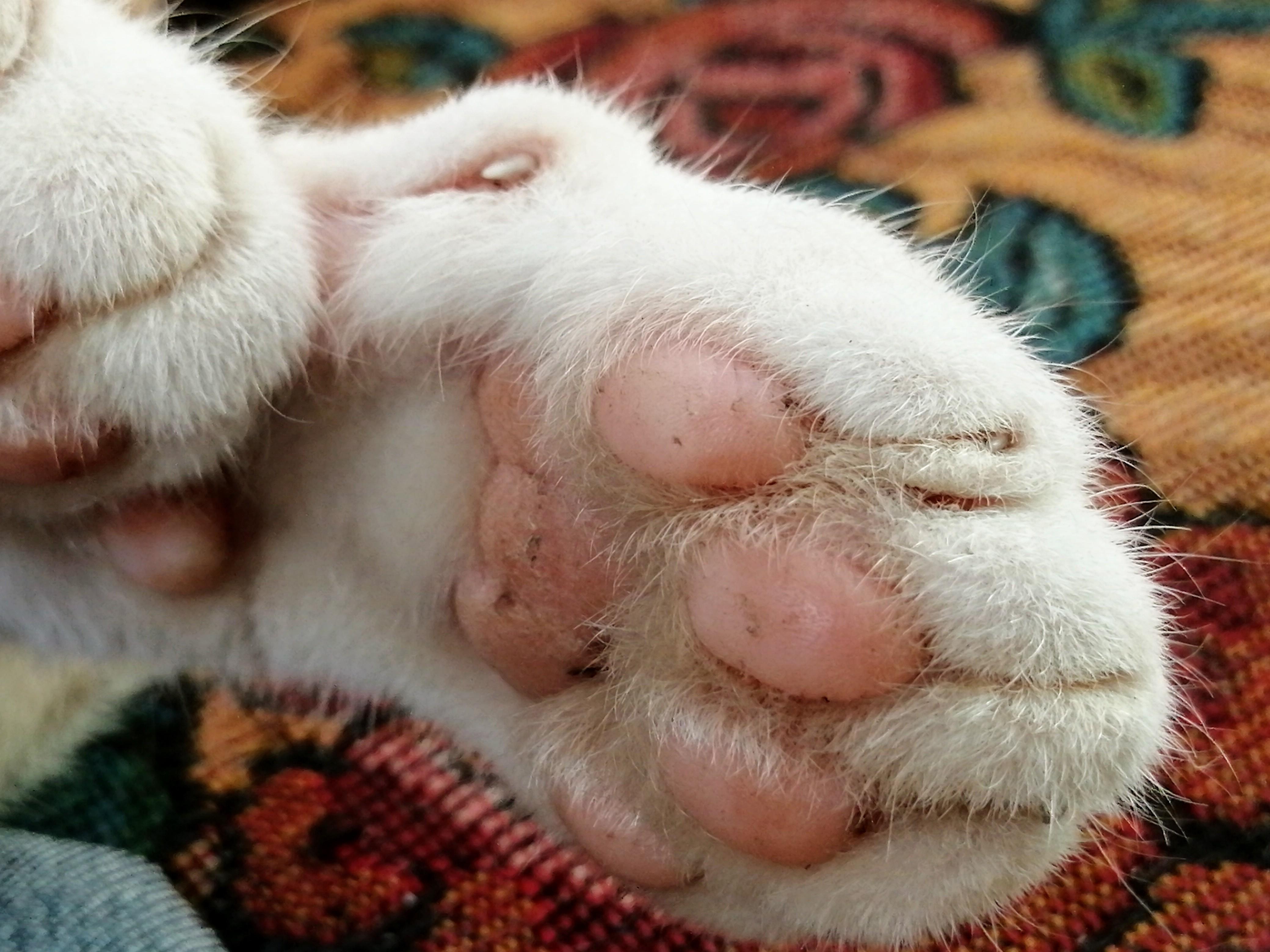 velká kočička zdarmatori černé nohy porno