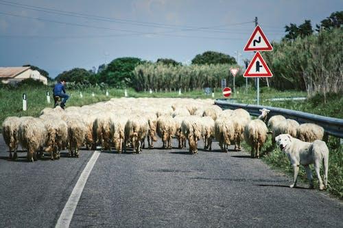 Fotobanka sbezplatnými fotkami na tému asfalt, cesta, cicavec, domáce zvieratá