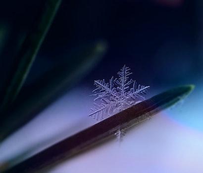 Free stock photo of cold, snow, art, dark