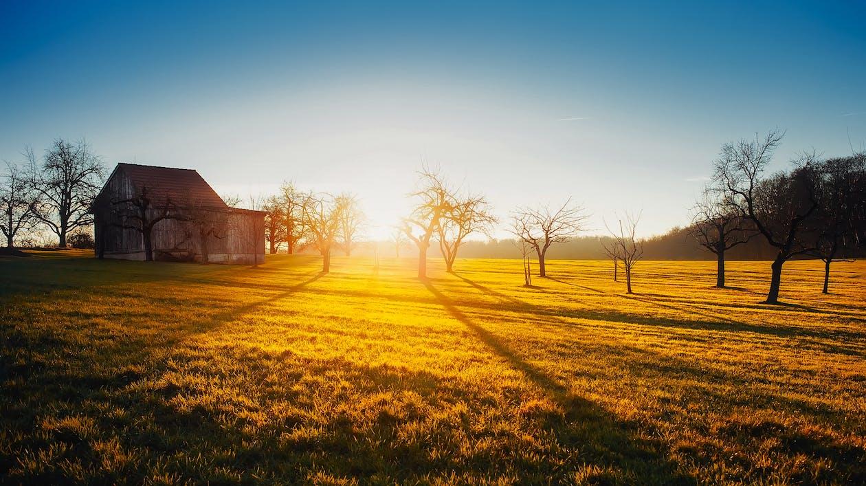 boerderij, bomen, dageraad
