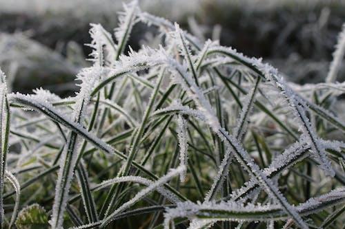 Kostnadsfri bild av flora, frost, frostig, fryst