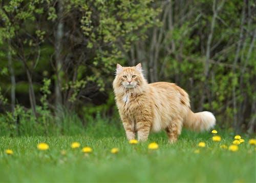 Δωρεάν στοκ φωτογραφιών με pet γάτα πορτοκαλί