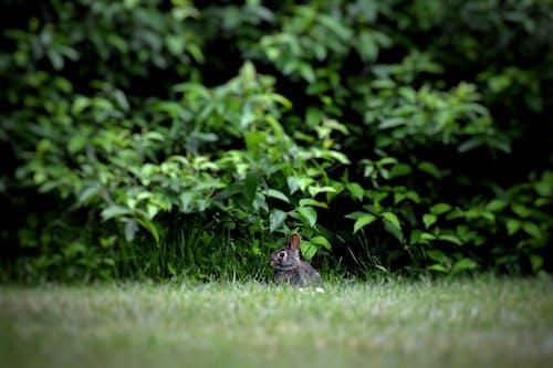 Photo of Rabbit Near Green Plants