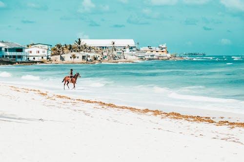 라이딩, 말, 모래, 바다의 무료 스톡 사진