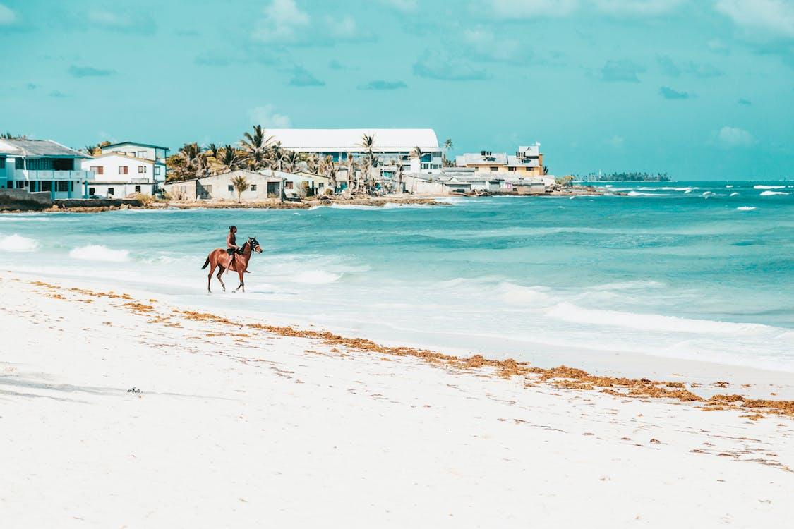 ακτή, άλογο, άμμος