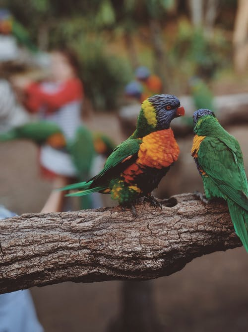 Close-Up Photo of Two Parrots