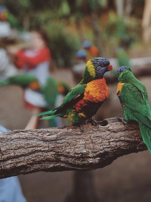 Foto profissional grátis de animais, animais selvagens, animal de estimação, ao ar livre