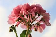 nature, plant, flower
