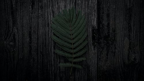 Photo of Dark Green Fern Leaves