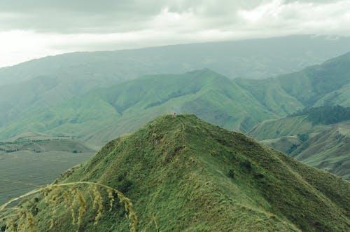 Photos gratuites de à feuilles persistantes, aventure, calme, environnement