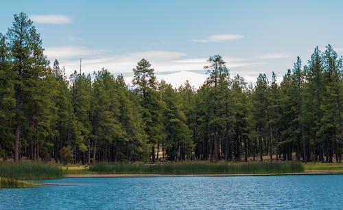 açık hava, çamlar, orman, yeşil içeren Ücretsiz stok fotoğraf