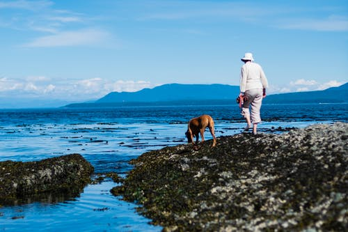Kostnadsfri bild av gående, gulföarna, hatt, hav