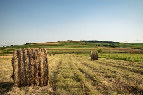 Photo of Hay Rolls on Grass Field