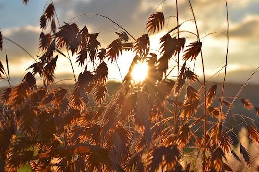 Free stock photo of landscape, nature, sunrise, grass