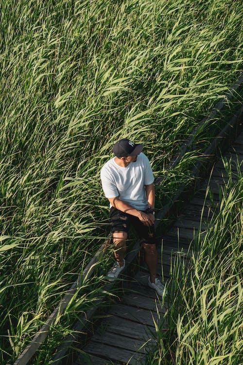 Ảnh lưu trữ miễn phí về ánh sáng ban ngày, bắn góc cao, ban ngày, cánh đồng lúa mì