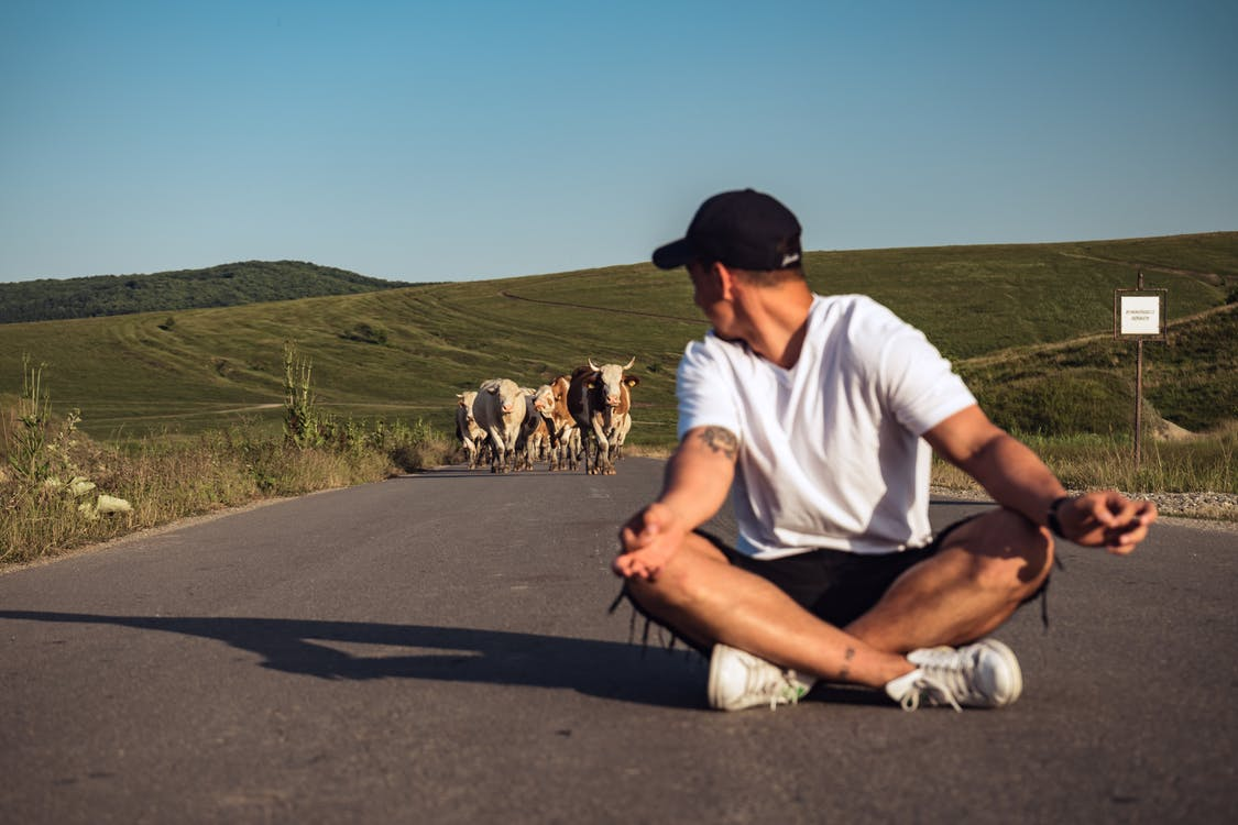 Man Sitting in the Middle of the Road in Front of Herd of Cattle