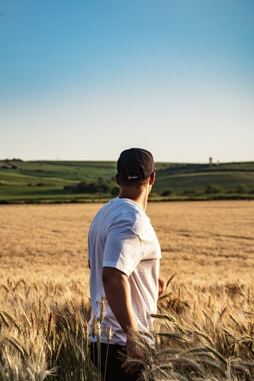 Photo of a Man in a Wheat Field