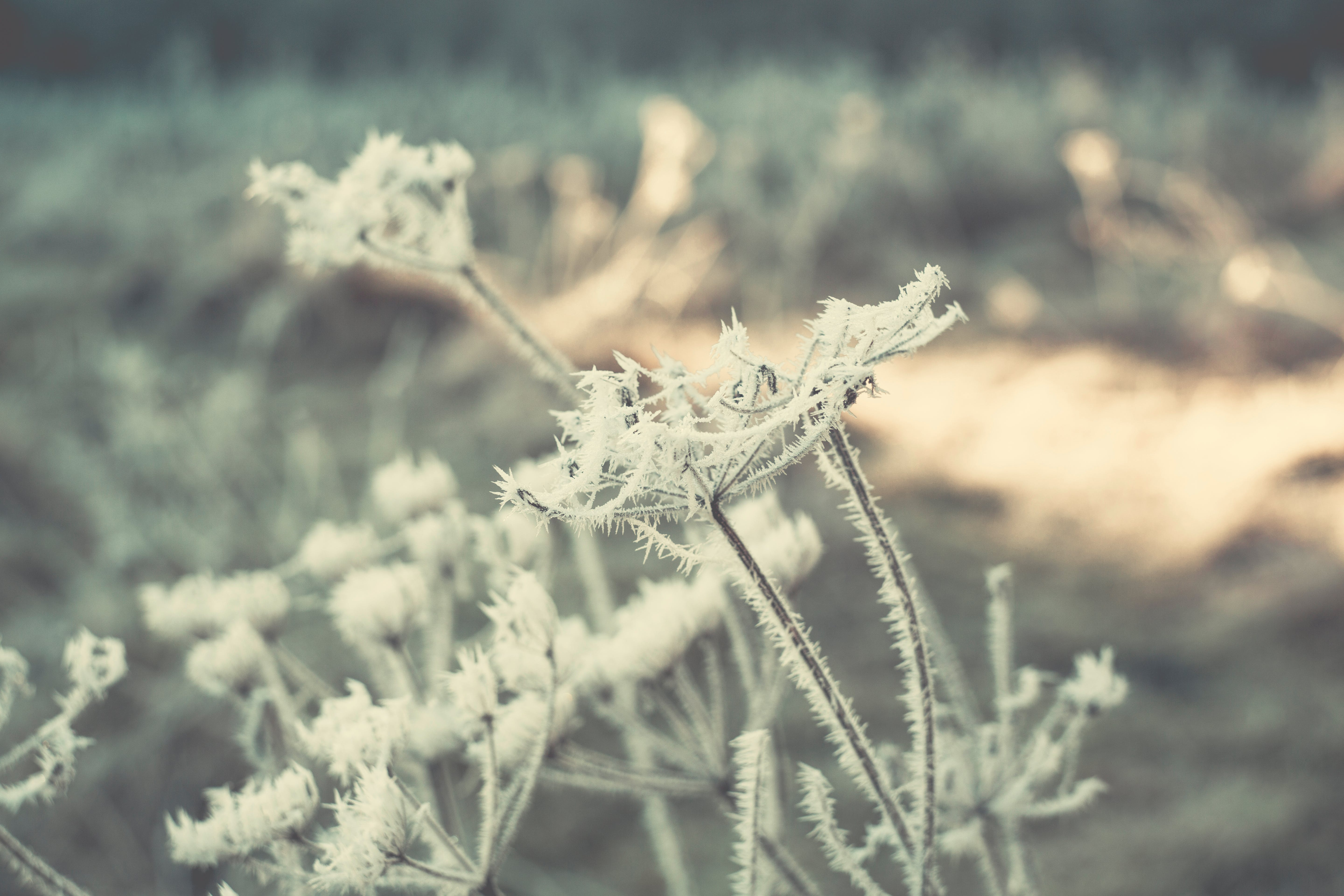Free stock photo of cold, snow, light, nature