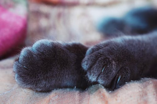 Close-Up Photo of Cat Paws