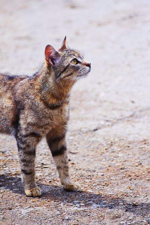 Photo of Tabby Cat on Pavement