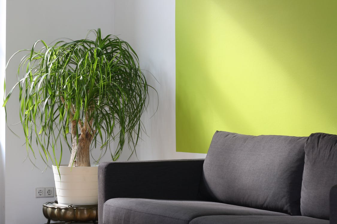 Green Leafed Plant on Pot Beside Sofa