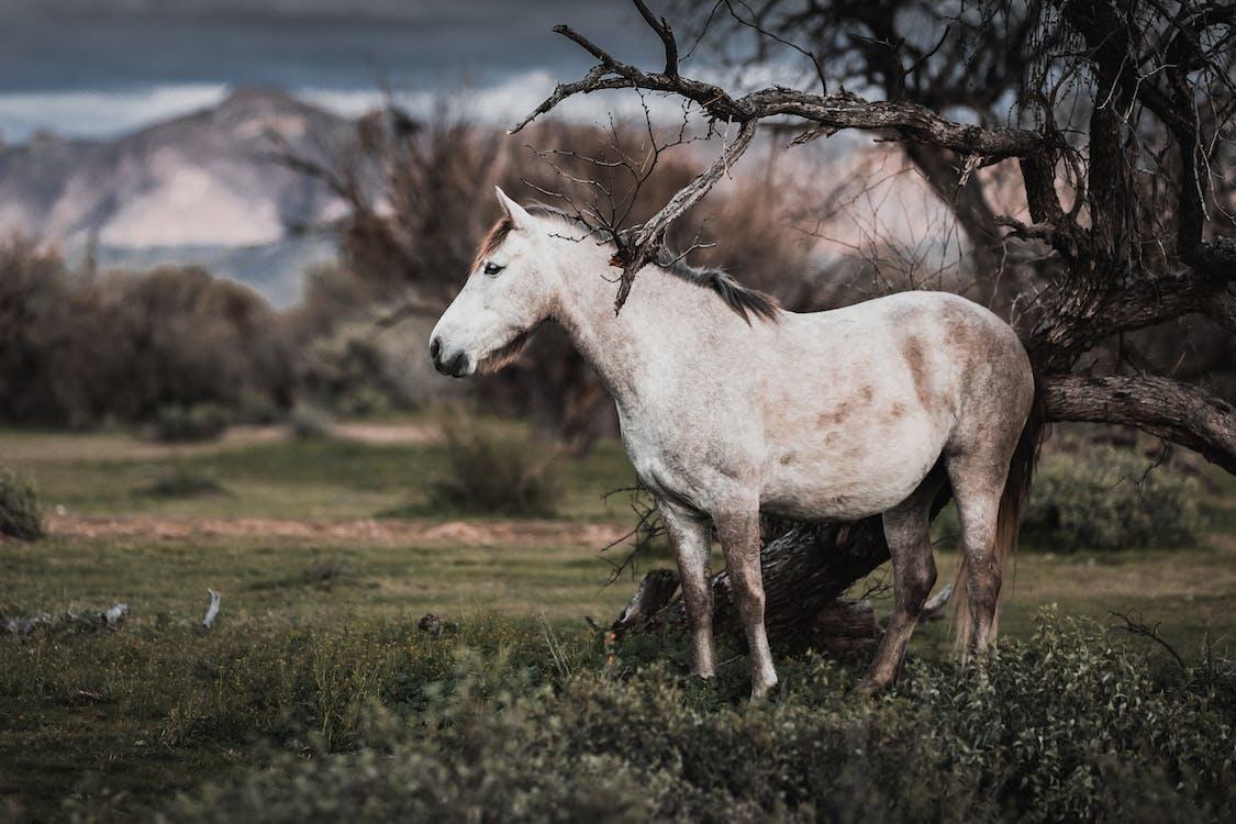 biely kôň, cicavec, hĺbka ostrosti