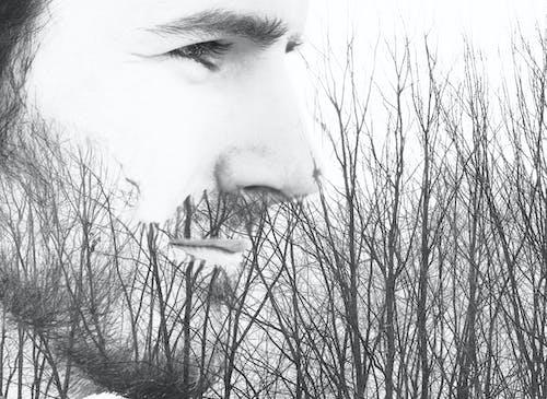 森林人, 樹木, 綜合 的 免費圖庫相片