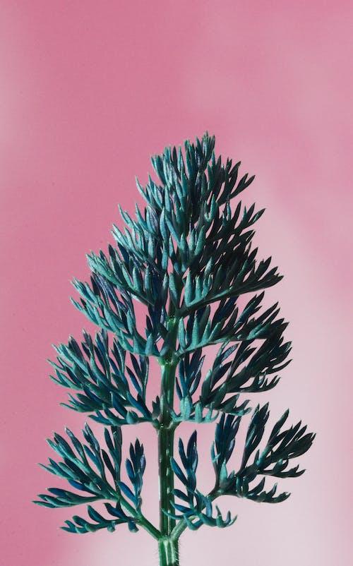 Kostenloses Stock Foto zu blatt, flora, grün, natürlich