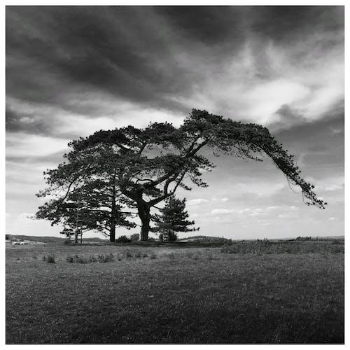 Foto stok gratis alam, bidang, fotografi monokrom, grayscale