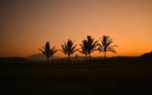 Ilmainen kuvapankkikuva tunnisteilla auringonlasku, auringonnousu, idyllinen, iltarusko
