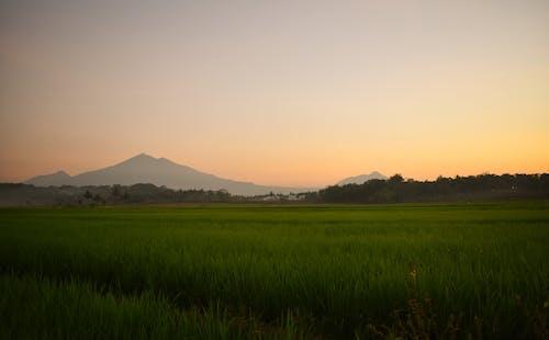 Ilmainen kuvapankkikuva tunnisteilla hämärä, ilta, maisema, riisipelto
