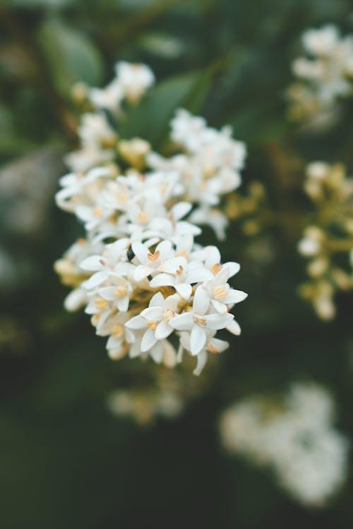 белые цветы, глубина резкости, красивый
