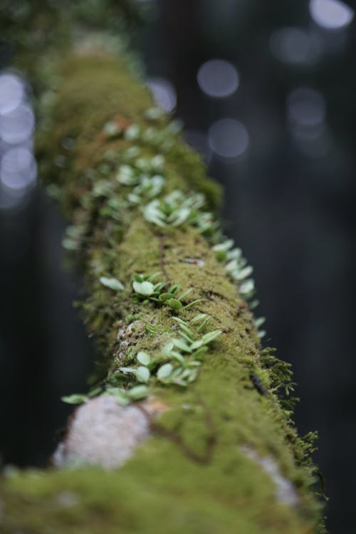 Macro Photography of Green Moss