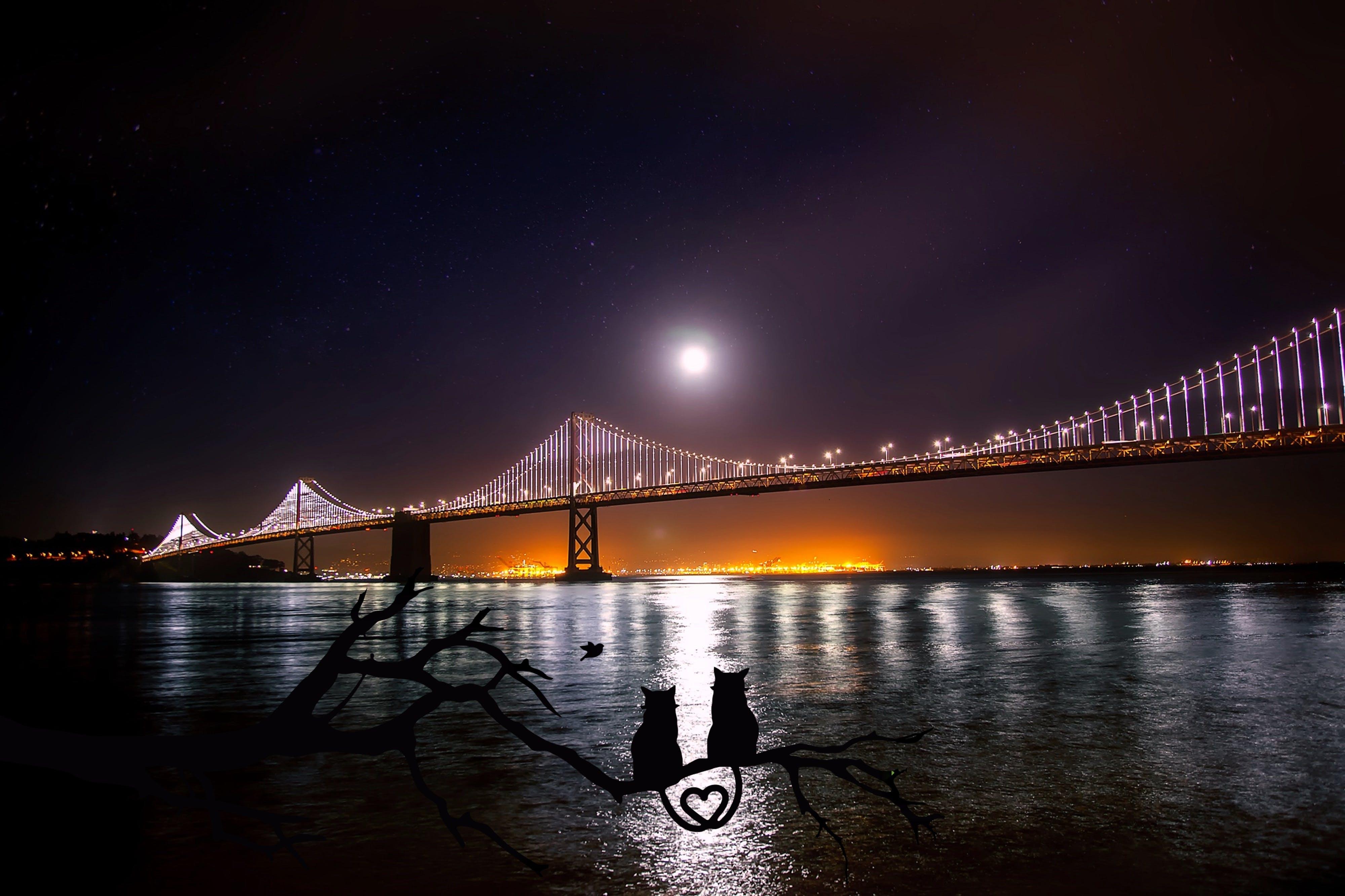 Grey Suspension Bridges