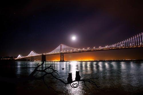Ingyenes stockfotó ág, Bay bridge, éjszaka, építés témában