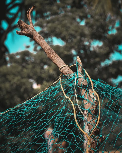 Blue and Yellow Net on Tree