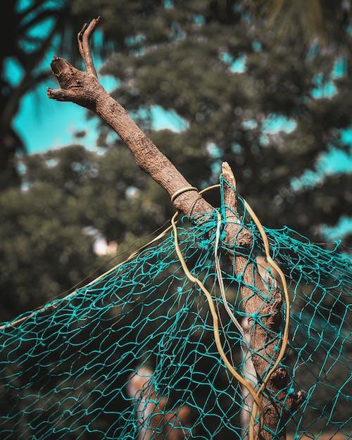 açık hava, ağ, ağaç gövdesi, ağaç kabuğu içeren Ücretsiz stok fotoğraf