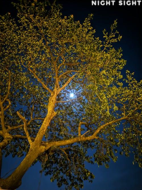 Fotos de stock gratuitas de cielo nocturno, ciudad nocturna, Luna, noche