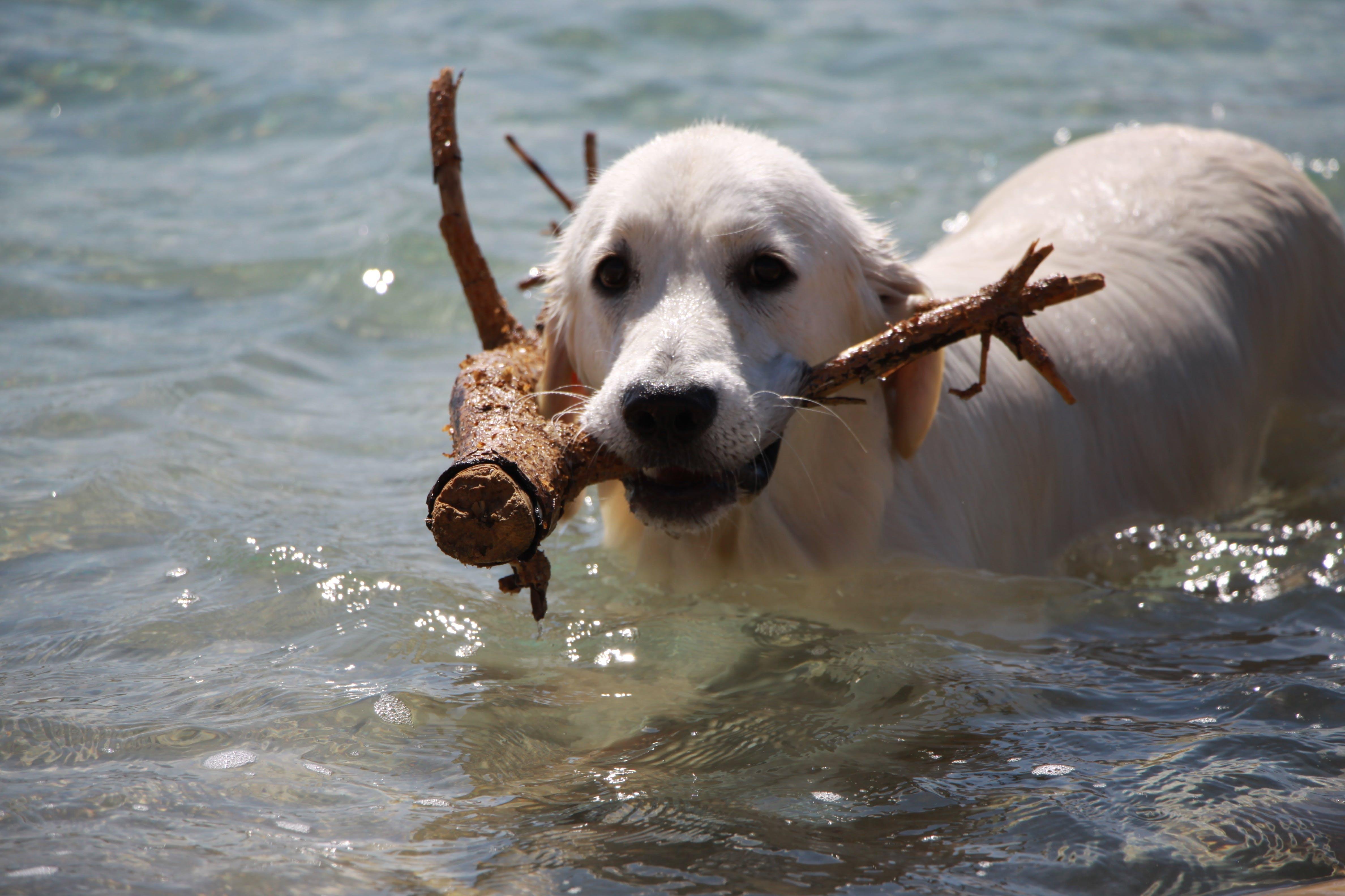 Free stock photo of sea, summer, animal, dog
