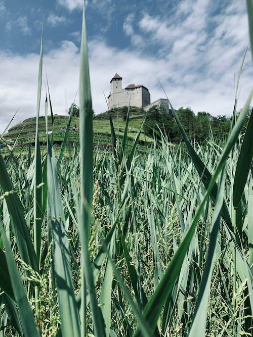 Fotos de stock gratuitas de agricultura, campo, césped, granja