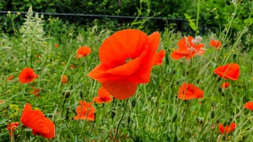 çiçek, Çiçekler, çim, doğa içeren Ücretsiz stok fotoğraf