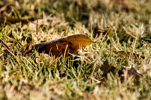 Selective Focus Photo of Dry Leaf on Grass