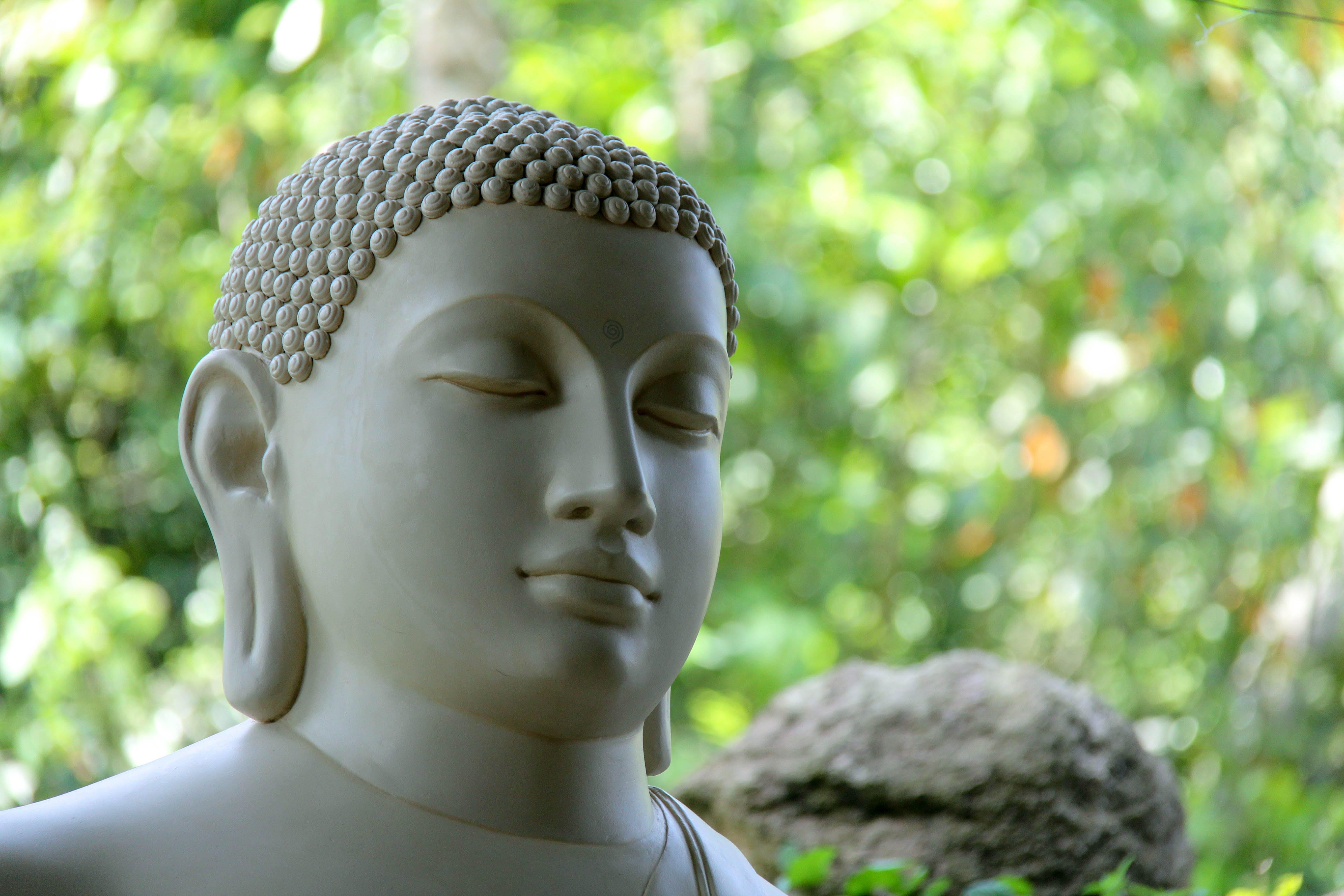 Free stock photo of buddha, sri lanka, mahamevnawa
