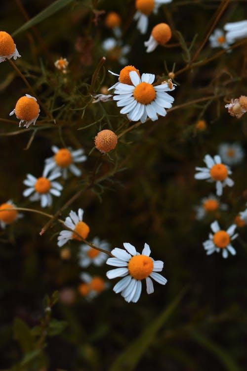 delikatny, flora, głębia pola