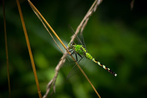 Fotobanka sbezplatnými fotkami na tému vážka, zelená