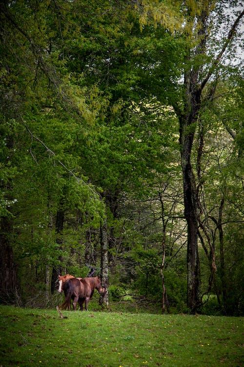 Fotobanka sbezplatnými fotkami na tému hory, kôň, pasienok, pokojný