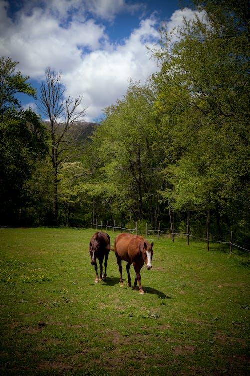paarden, rustgevende scène, rustige scène